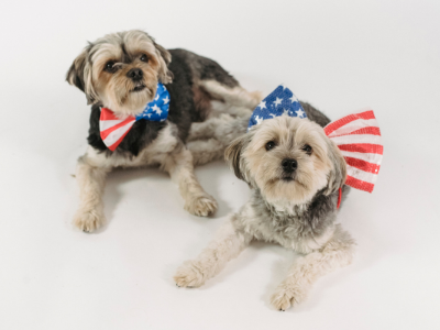 Ways to Comfort Your Pet on July 4.